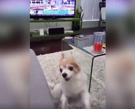 VIDEO: Koer läheb ülinärvi, kui talle keskmist sõrme näidata