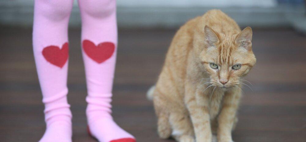 Millest aru saada, et kass vajab lisatähelepanu?