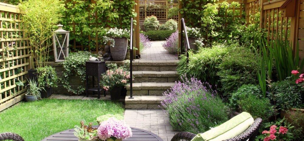 Selleks et aed paistaks kaunis ja värviküllane, tuleks omavahel kokku panna püsikud ja üheaastased taimed. Siis saab igal aastal mõned taimed välja vahetada.