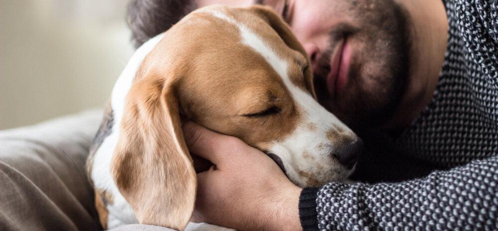 TEST   Tugev või nõrk: milline on sinu ja koera vaheline side?