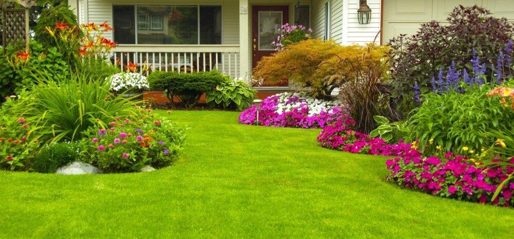 Создание своего сада — с чего начать?