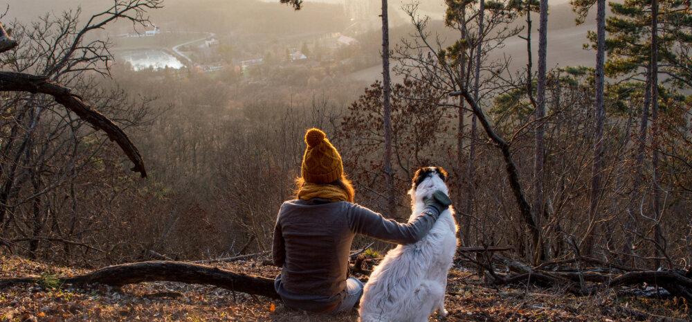 Uudne ja huvitav ÜRITUS   Tallinna Ülikooli suvekool pakub esmakordselt võimalust õppida koerte käitumist