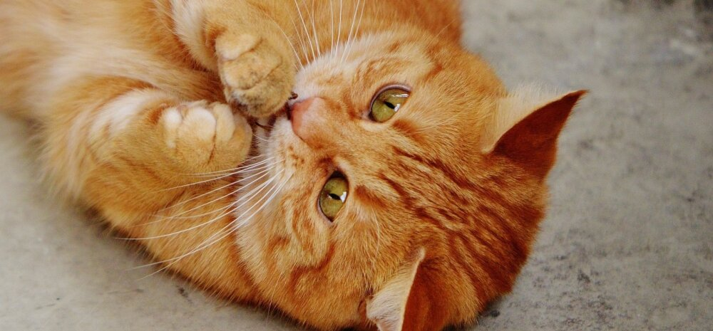 Kassiomanik hoiatab: patsikummid võivad kassile lausa surmavalt ohtlikud olla!
