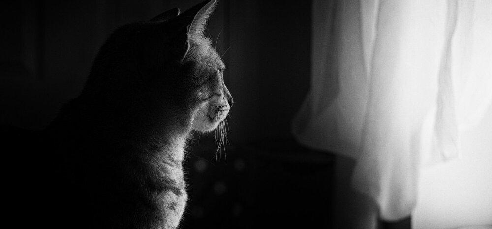 Nädalavahetuseks maale: kui kauaks võib oma kassi üksinda koju jätta?