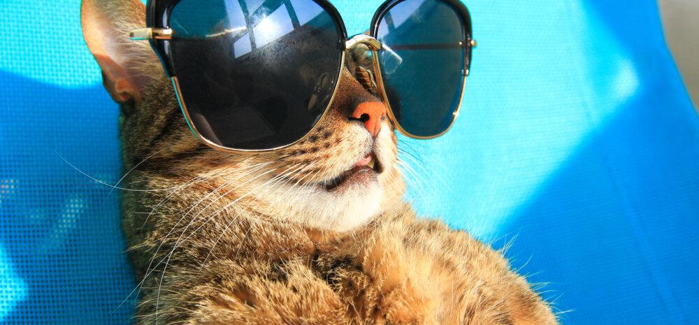 Kuidas kassid higistavad? Neil on tapva palavusega võitlemiseks kavalad nipid