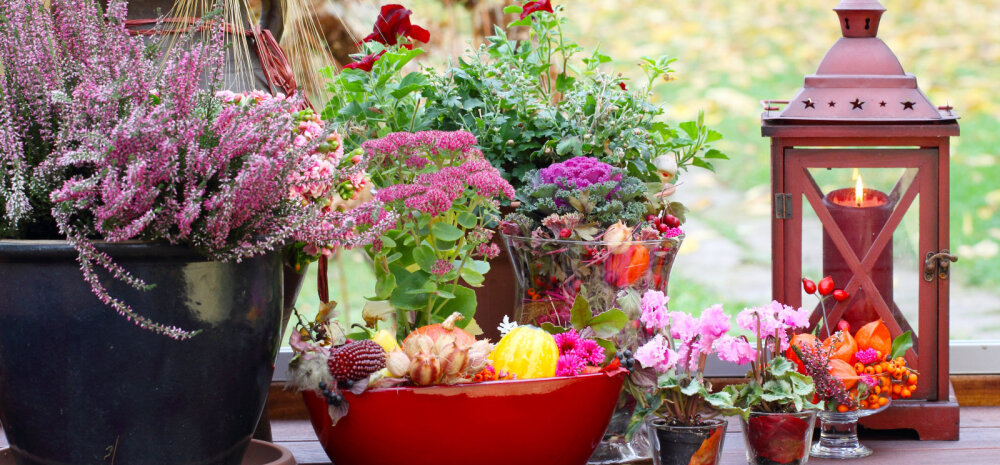 Сад, огород и цветник в ноябре — последние работы перед зимой (+ пара секретов)