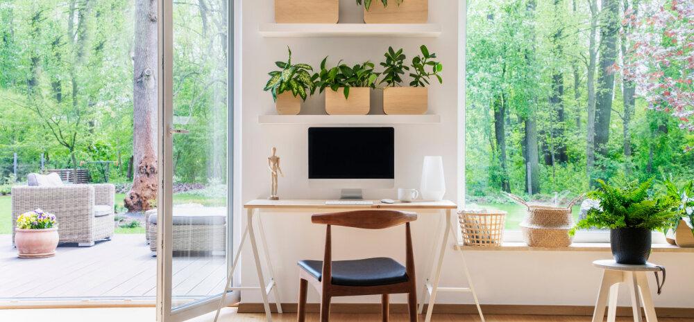Millised toataimed sobivad sinu kodu ja eluviisiga kõige paremini?