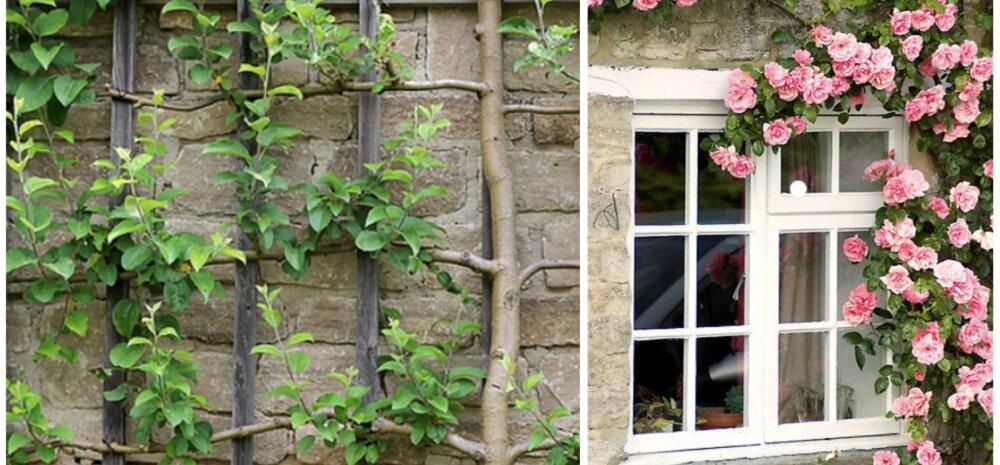 ИДЕЯ │ Растения, которые скроют неприглядную часть здания, или Вертикальное озеленение без деревьев