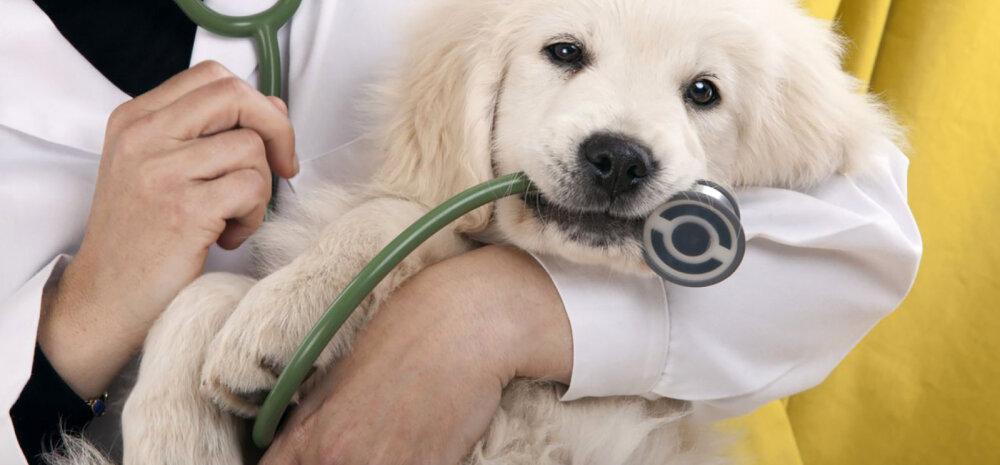 KASULIK TEADA | Loomaarstihirmu saab vältida