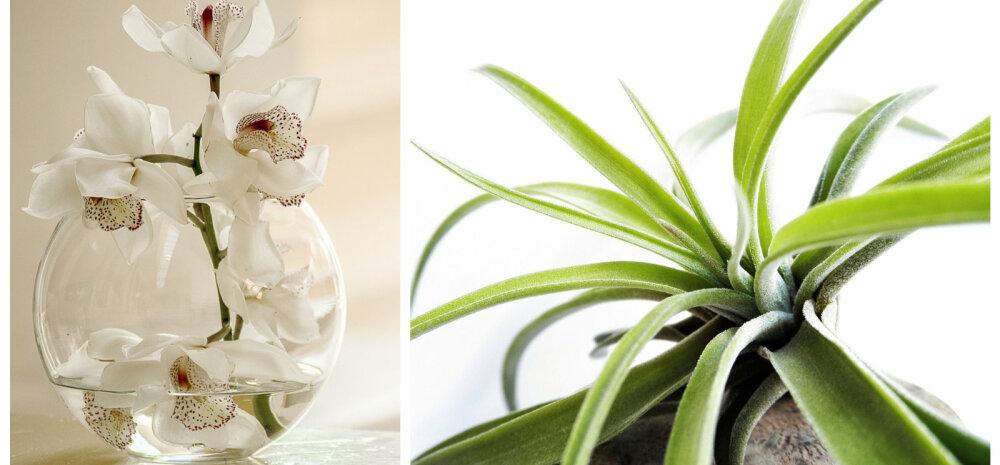 Овнам подойдет орхидея, или Комнатные растения по знаку зодиака
