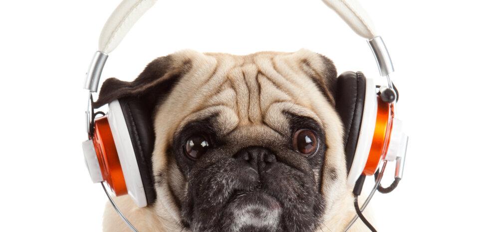 30 unikaalset nime lemmikloomale, mis on inspireeritud muusikamaailma suurkujudest