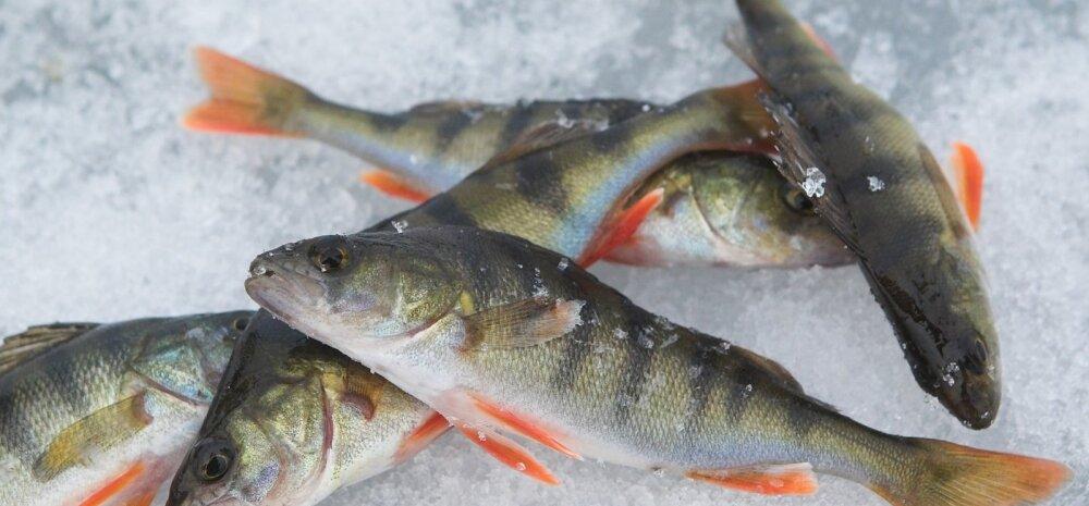 kalad, jääpüük, talvine kalapüük