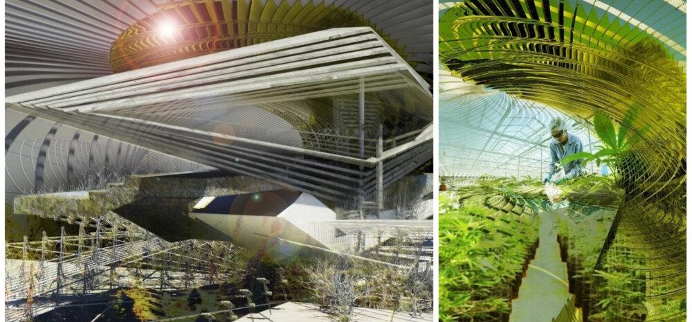 ФОТО | Инновационная ферма по выращиванию марихуаны