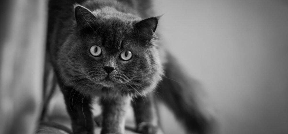Toimetulek leinaga: kas kassid suudavad surma ette näha?