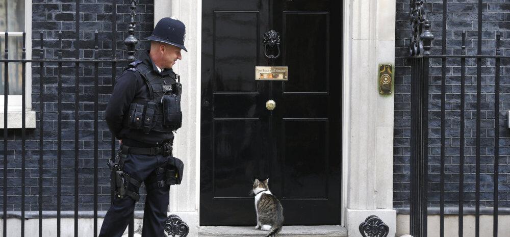 David Cameroni kõige alatum vale? Peaministri brändi loomine kassi kaudu