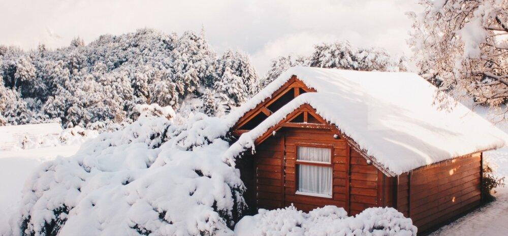 TALV AIAS | Kuidas kaitsta puid ja põõsaid lume, ereda päikese ja näriliste eest?