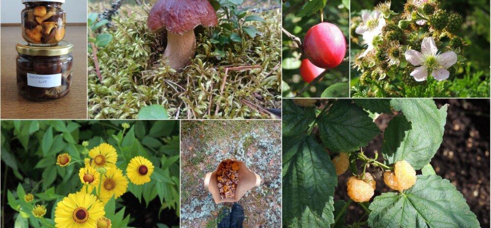 AIAHOOLIKU BLOGI | Erakordne külaline aias, aus ülestunnistus ja pisut seenejuttu