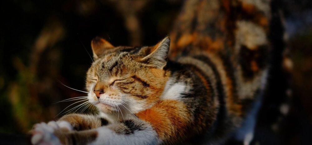 Kuus lõbusat tähelepanekut, et kassidel on üleloomulikud võimed