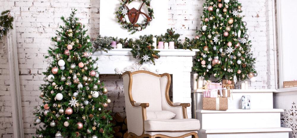 NÕUANDEID | Kuidas leida just see õige jõulukuusk?