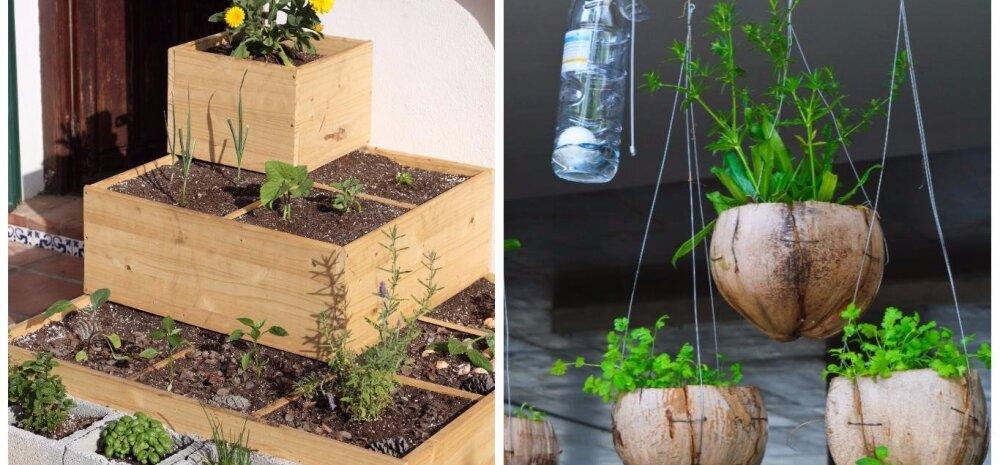 СОВЕТЫ │ Обустраиваем сад на своем балконе