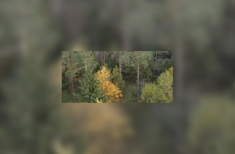 Mets ei saa otsa, kuid mädaneb