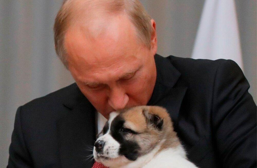 Putin Türkmenistani riigpealt mullu kingiks saadud kutsikaga
