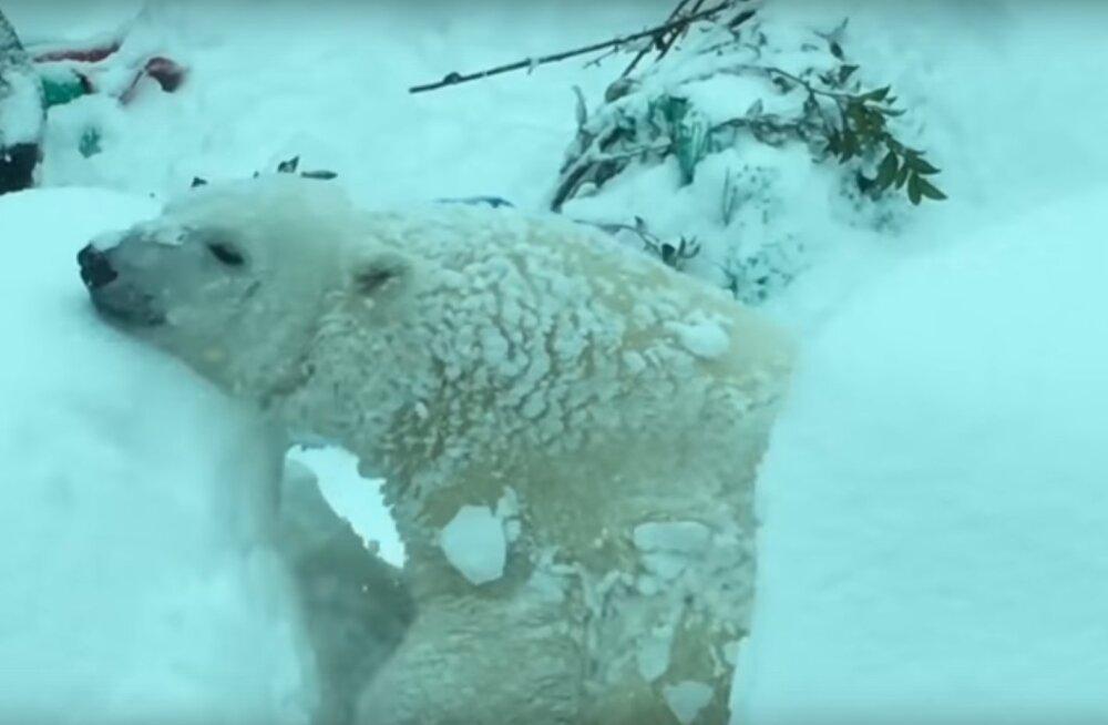Südantsoojendav reaktsioon: suure lume tõttu suleti uhke loomaaed, mida arvasid sellest loomaaia loomad?