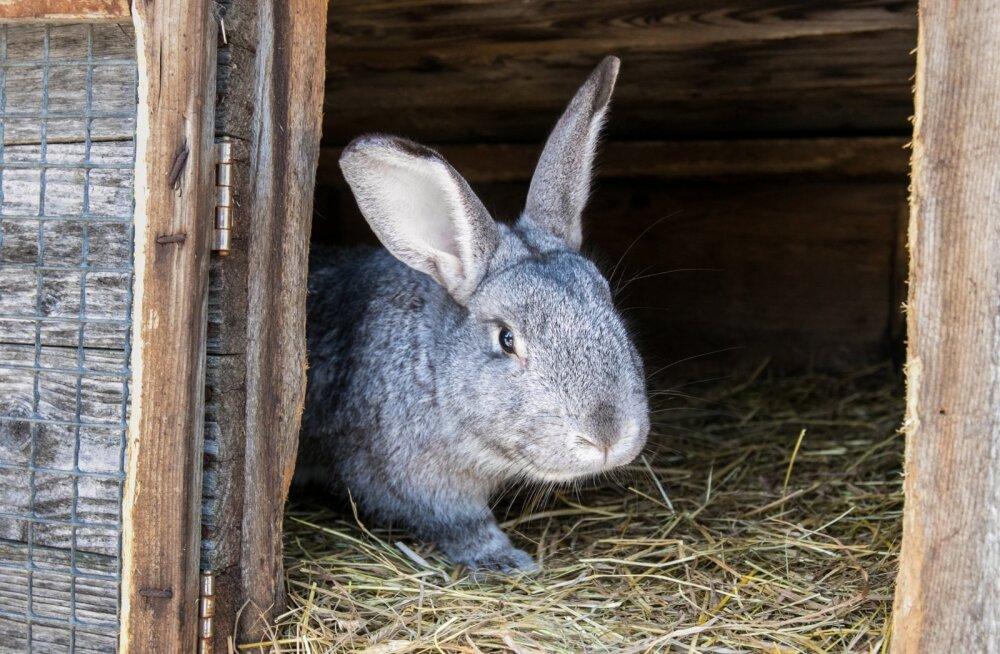 В Кристийне спасатели помогли оказавшемуся на трубе зайцу