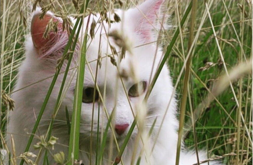 KIISUBLOGI | Tartu kass Ada suureks nõrkuseks on paid, mis algavad kõrvaotstest ja liiguvad kohe sabaotsani välja