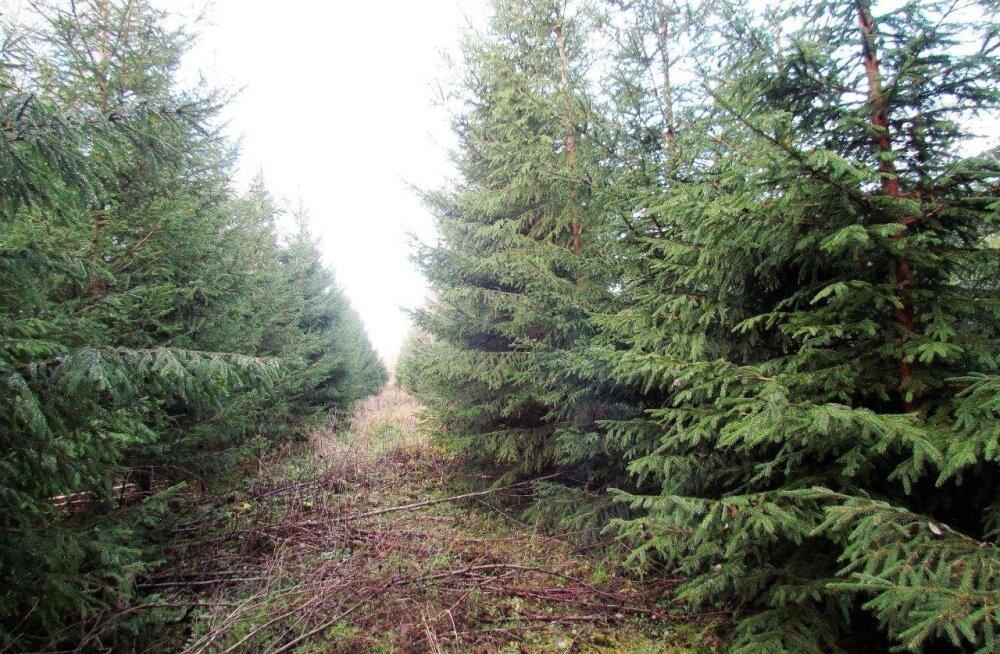 Leili metsalood | Kolmsada meetrit rohelist koridori
