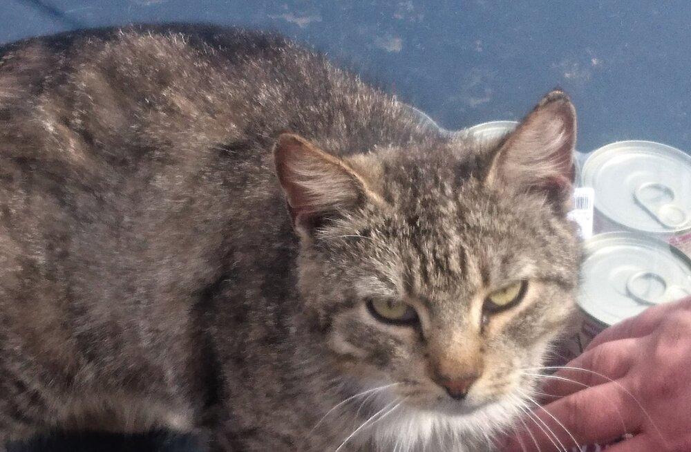 FOTOD   Kuidas läheb Narvast leitud happega üle valatud kassidel täna?
