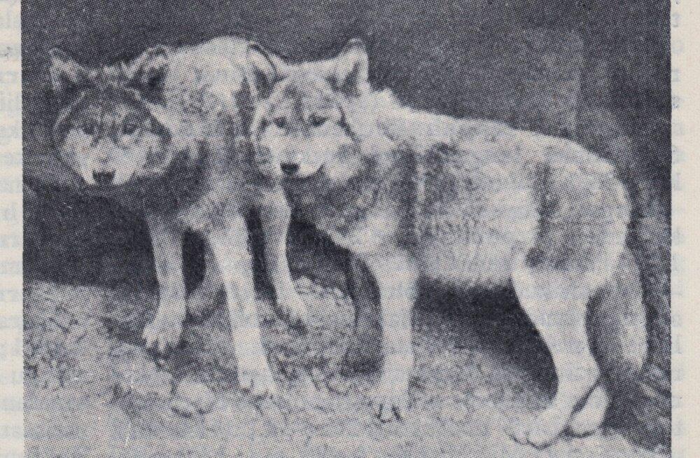 Mets, väljavõtted Eesti Entsüklopeedia