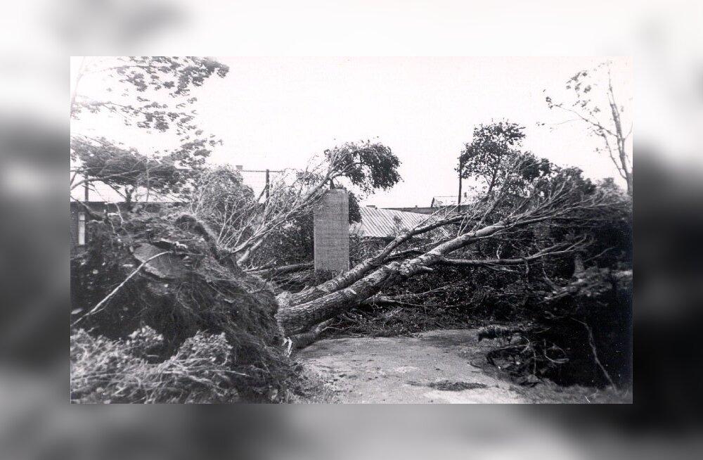 Kuni 35 m/s tormituul, mis lendas Eestis kaks päeva järjest, rebis maapinnast välja suured puud nende juurtega.
