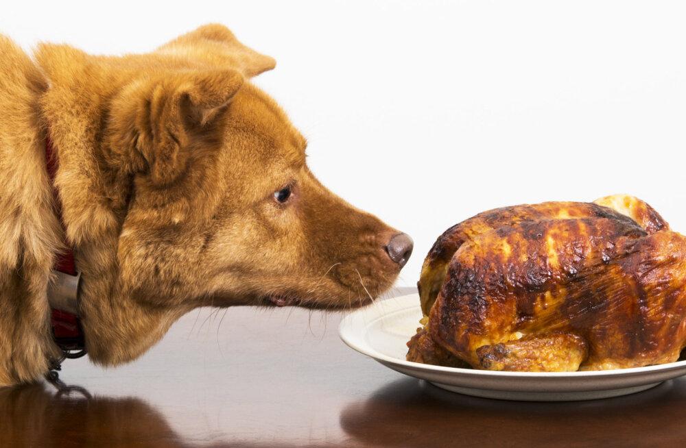 18 asja, mida ära koerale oma toidulaualt poeta