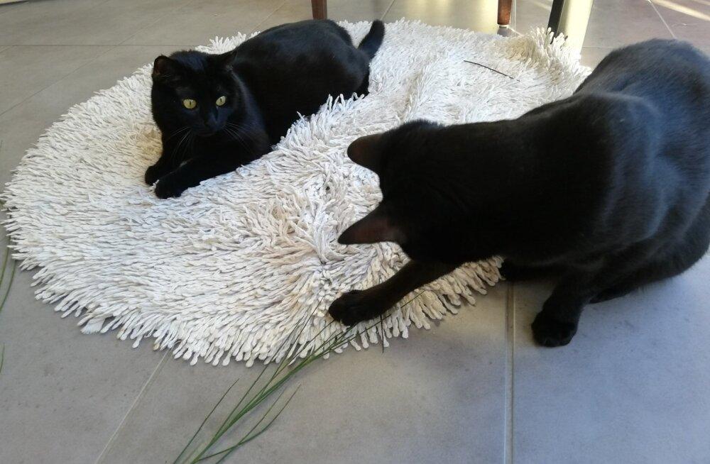 Arvatavasti loksub see suhe veel paika, sest kassipoiss on alles noor, saab peagi kaheaastaseks.