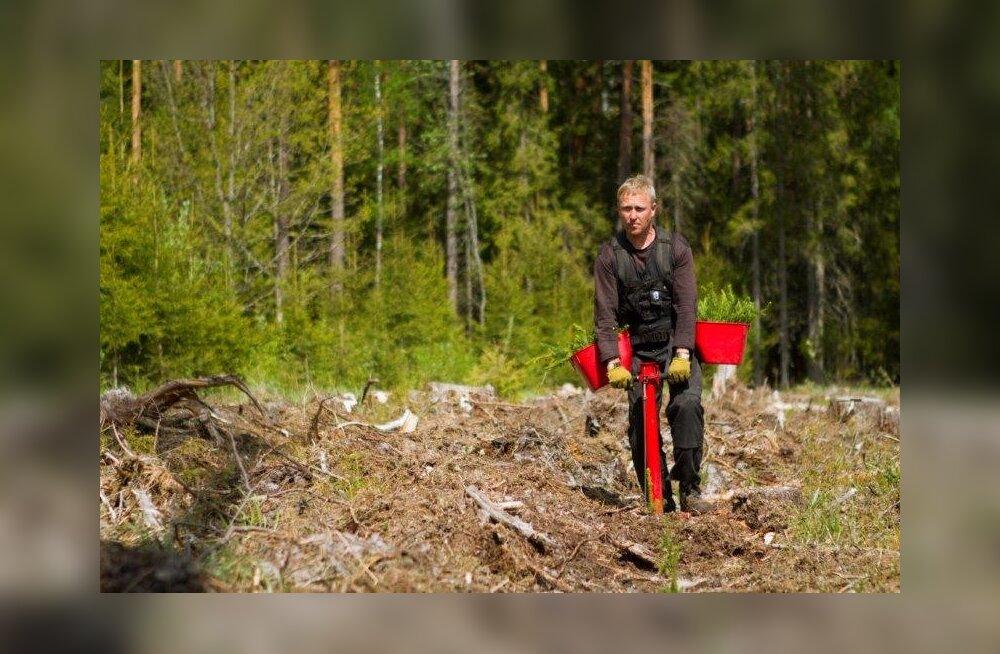 Начался сезон посадки леса — RMK использует новейшие решения