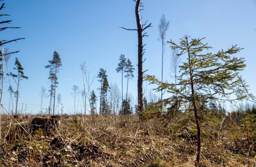 Kodanikuühenduse viidatud metsaraiel Tõrva vallas keskkonnainspektsioon rikkumisi ei tuvastanud