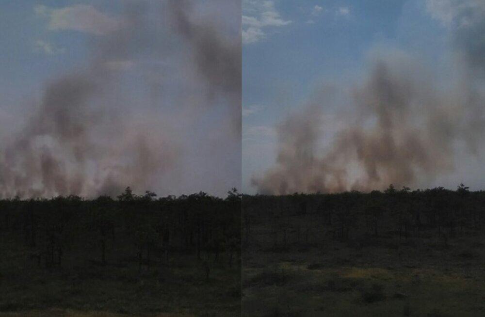 ФОТО: На природоохранной территории в Алам-Педья горит около 14 гектаров леса