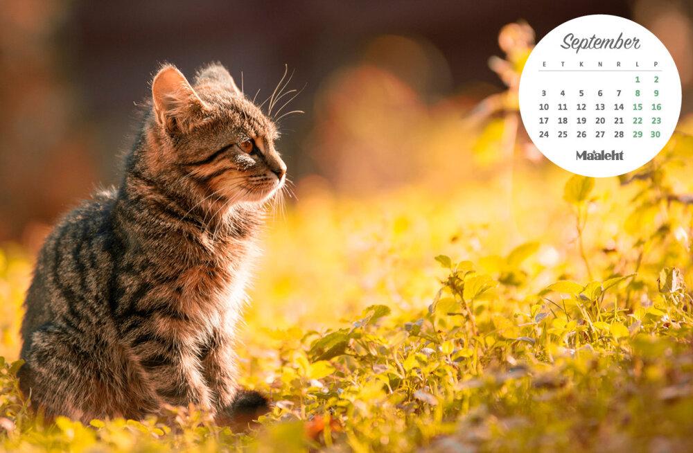 Laadi taustapildiks kaunis Maalehe kalender