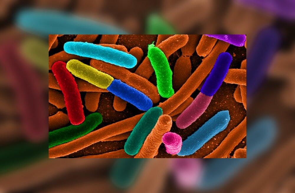 Kuidas bakterid suhtlevad? Autor/allikas: Wikimedia Commons
