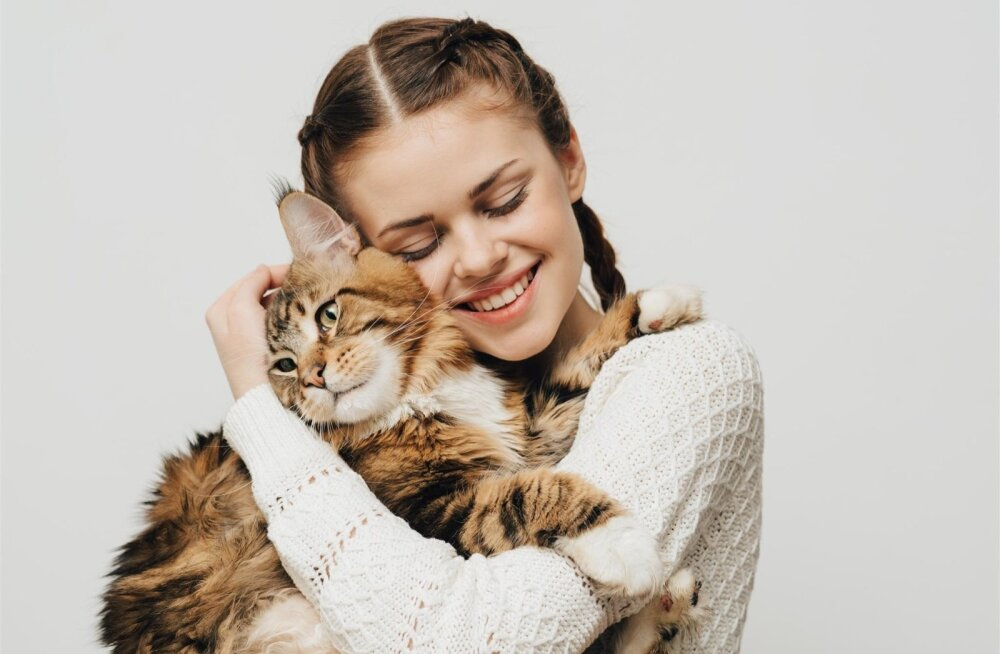 Peale välimuse on tähelepanuväärne ka maine coon'i tõugu kasside iseloom: nad on väga sõbralikud, seltsivad ja kohanemisvõimelised, seda nii inimeste kui ka pere teiste lemmikloomadega.