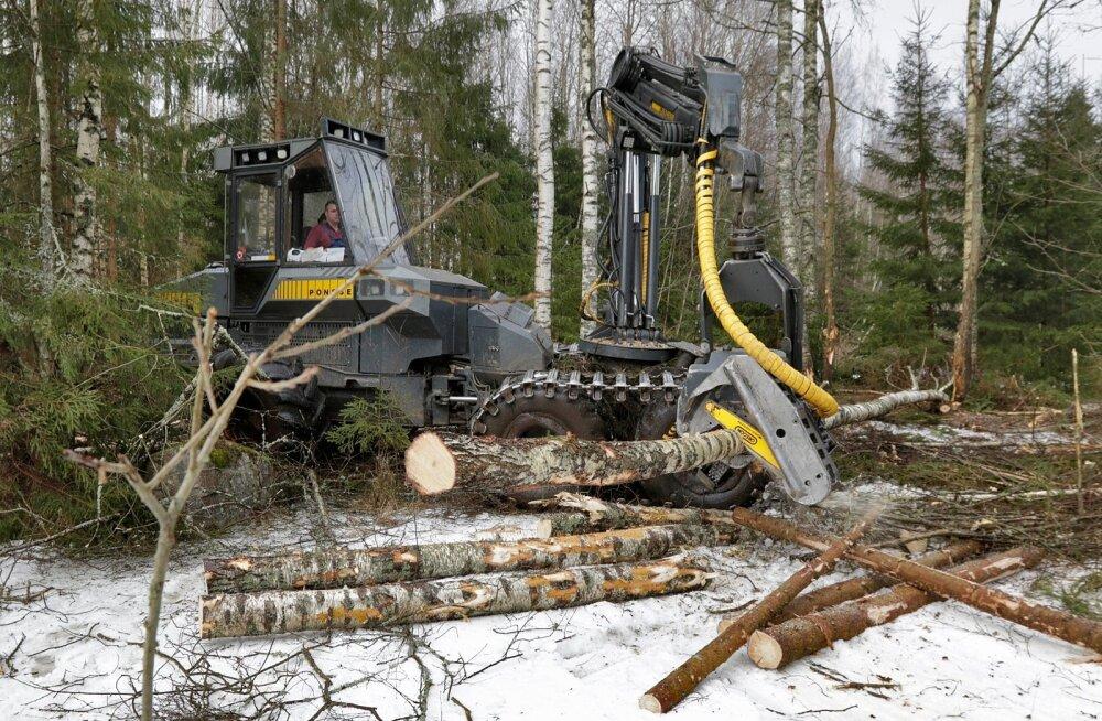 Metsalõikus ja palgivedu Saarde valla metsas