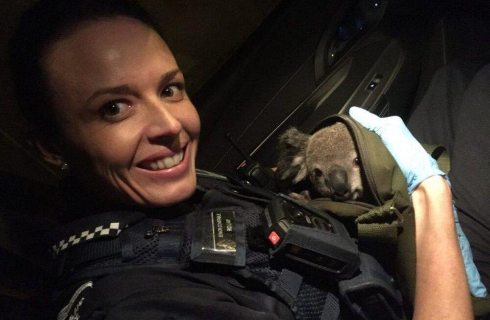 ARMAS: Austraalia politsei leidis rutiinse kontrolli käigus naise seljakotist üllatava leiu
