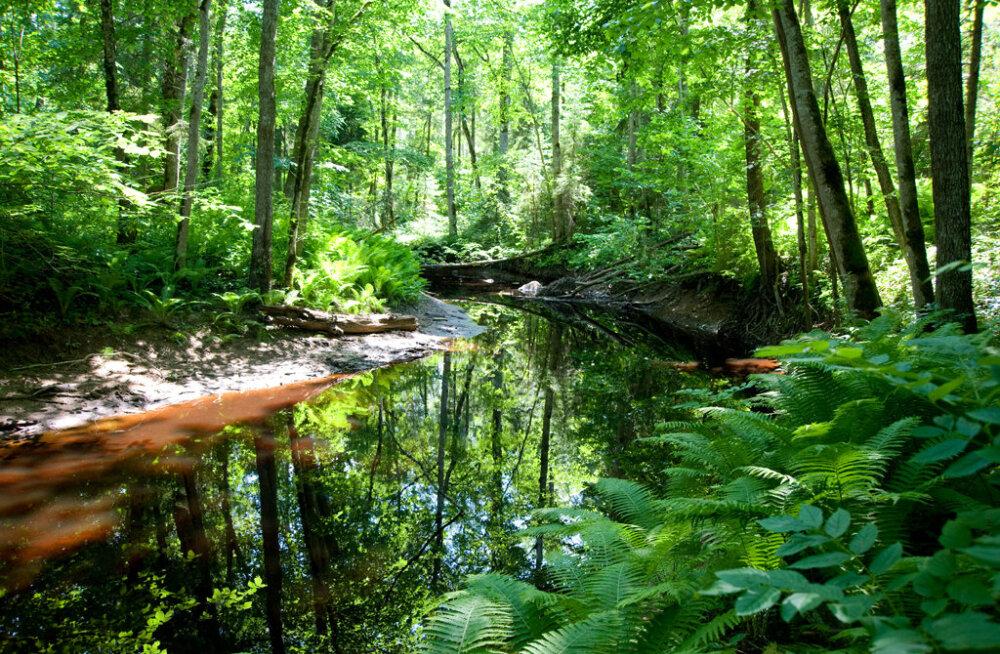 Эстонская Сибирь и природный липовый лес