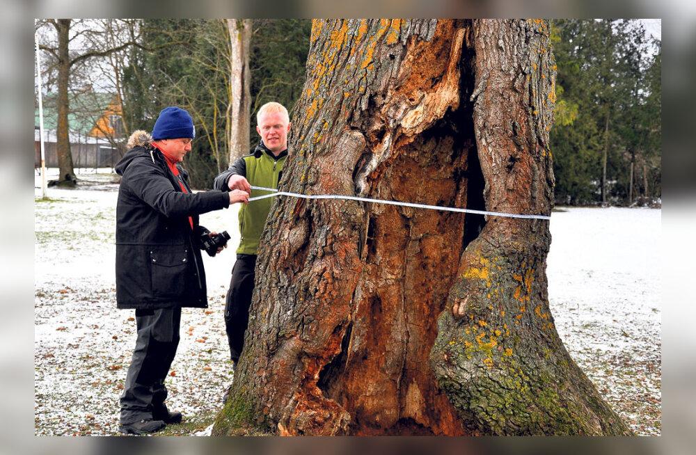 Algab Euroopa puu konkurss