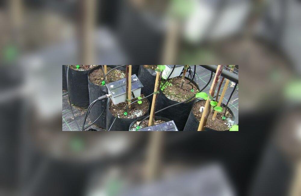 Seedri puukoolis katsetatakse ülimoodsaid kastmisseadmeid