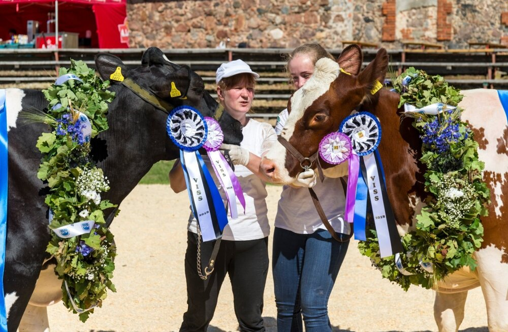 """""""Viss 2018"""" tiitlivõitjad lehmad Mehu ja Jasmiin koos treenerite Helgi Velskeri ja Margit Sillastega."""