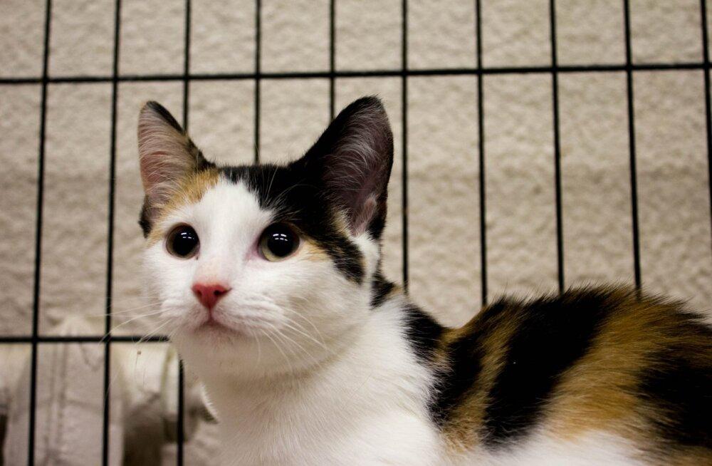 Kass Andra lugu   Kujutage ette elu, kus te ei suuda oma keha enam kuidagi kontrollida...