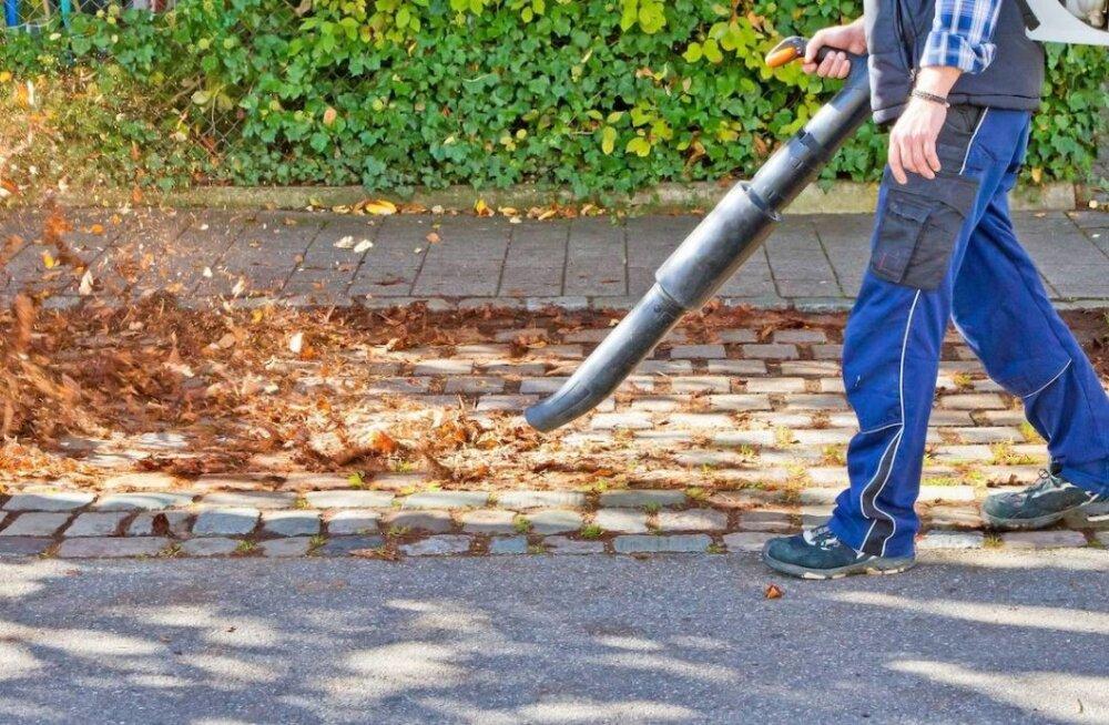 Just see tööriist päästab su lehtede riisumisel tekkivast seljavalus