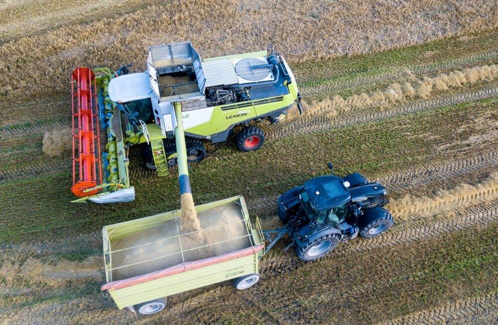 Uuring: teravilja saagikus jääb mullusest väiksemaks pea 40 protsenti